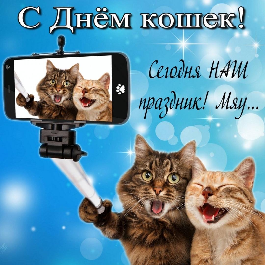 """Цветная картинка, на ярком голубом фоне, в правом нижнем углу изображены полосатые кот и кошка, которые подобно людям с улыбкой делают селфи на свой котофон(в правой лапке у кота селфи-палка). Вверху изображения две надписи: """"С Днём кошек!"""" и """"Сегодня наш праздник! Мяу""""."""
