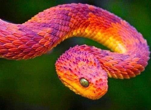 Обои На Рабочий Стол Змеи