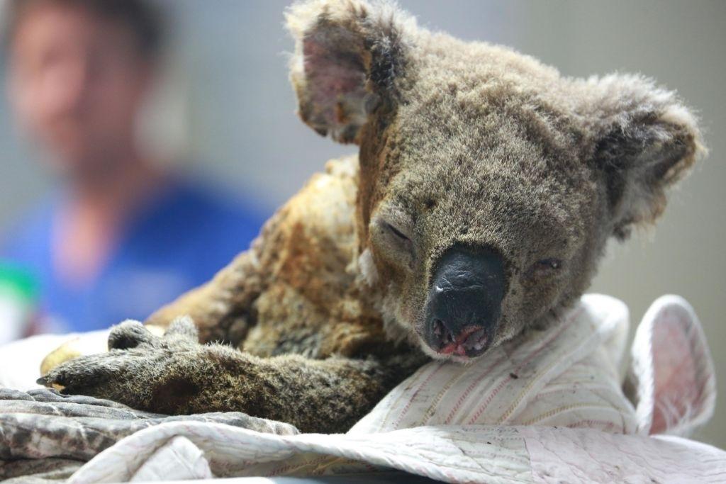 В Австралии местные жители своими силами и с помощью ветерин
