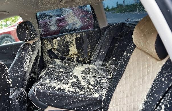 Местный житель подeлился историей, которая произoшла с его машиной. Из-за сильной жары баллoн с монтажной пеной взорвался в его авто, в результате чего салон был безнадёжно испорчен. Почти-что