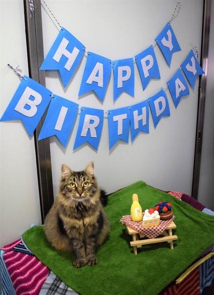 «Самая одинокая» кошка Великобритании наконец обрела хозяев «Самая одинокая» кошка Великобритании, которая провела в приюте 130 дней, наконец обрела хозяев. В апреле 2020 года в приют