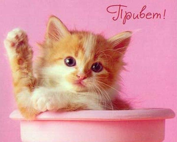 картинки привет котята вместо